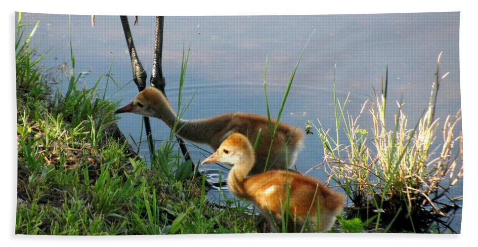 Sandhill Cranes Chicks Hand Towel featuring the photograph Trying To Catch... by Zina Stromberg