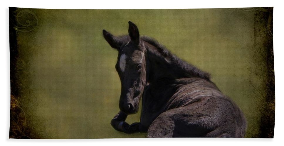 Animal Hand Towel featuring the photograph Tuckered Out by Davandra Cribbie