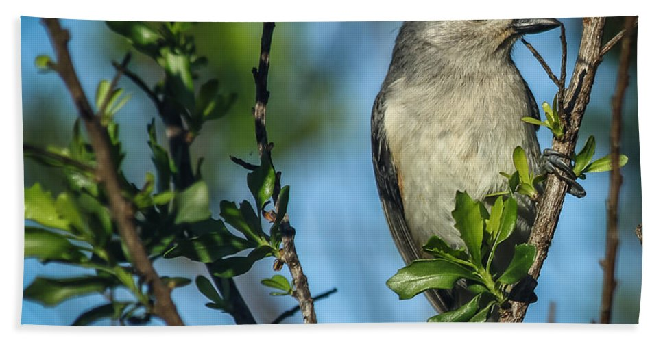 Florida Bath Sheet featuring the photograph Tufted Titmouse by Jane Luxton