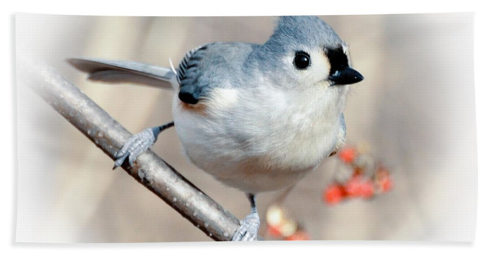 Tufted Titmouse Bath Sheet featuring the photograph Tufted Titmouse Love by Kerri Farley
