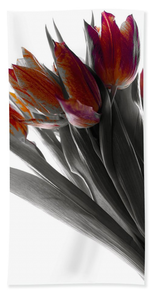 Tulips Hand Towel featuring the photograph Tulip Color Block by Joseph Hedaya