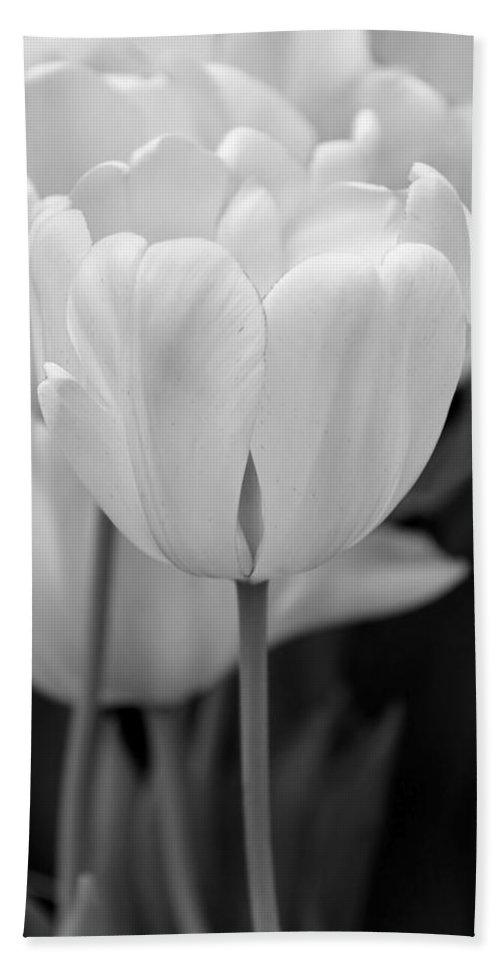 Tulip Bath Sheet featuring the photograph Tulip Flowers In The Garden Monochrome by Jennie Marie Schell