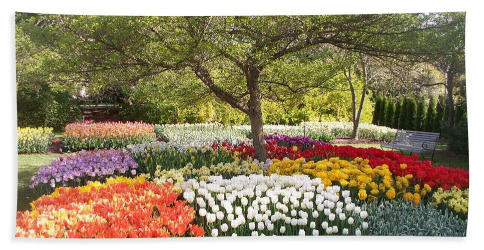 Tulip Hand Towel featuring the photograph Tulip Garden by Eric Schiabor