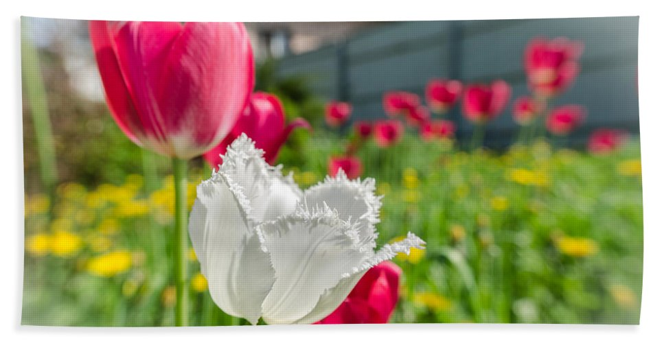 House Bath Sheet featuring the photograph Tulip Garden by Michael Goyberg