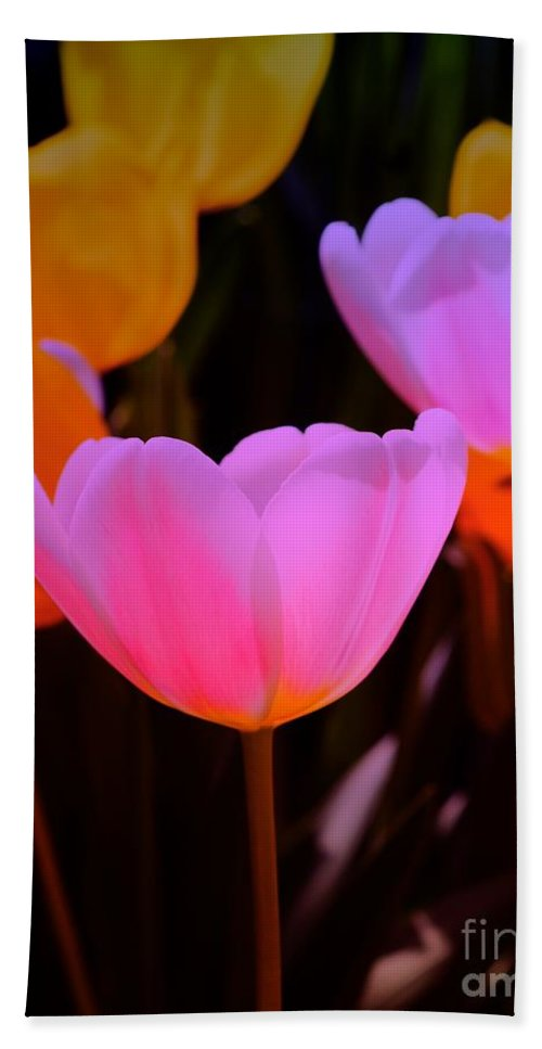 Tulip Hand Towel featuring the photograph Tulip Glow by Kathleen Struckle