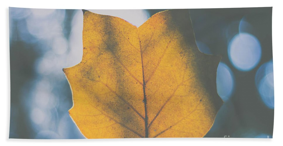 Tulip Poplar Hand Towel featuring the photograph Tulip Poplar Blues by Bethany Helzer