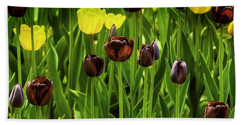 Usa Bath Sheet featuring the photograph Tulip Race Time by LeeAnn McLaneGoetz McLaneGoetzStudioLLCcom