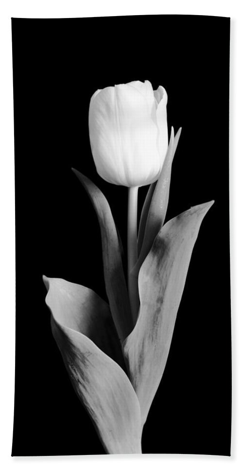 Tulip Hand Towel featuring the photograph Tulip by Sebastian Musial