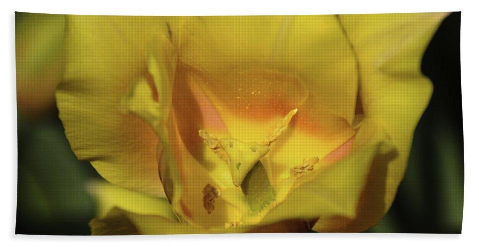 Usa Bath Sheet featuring the photograph Tulip Time Hopeless Love by LeeAnn McLaneGoetz McLaneGoetzStudioLLCcom