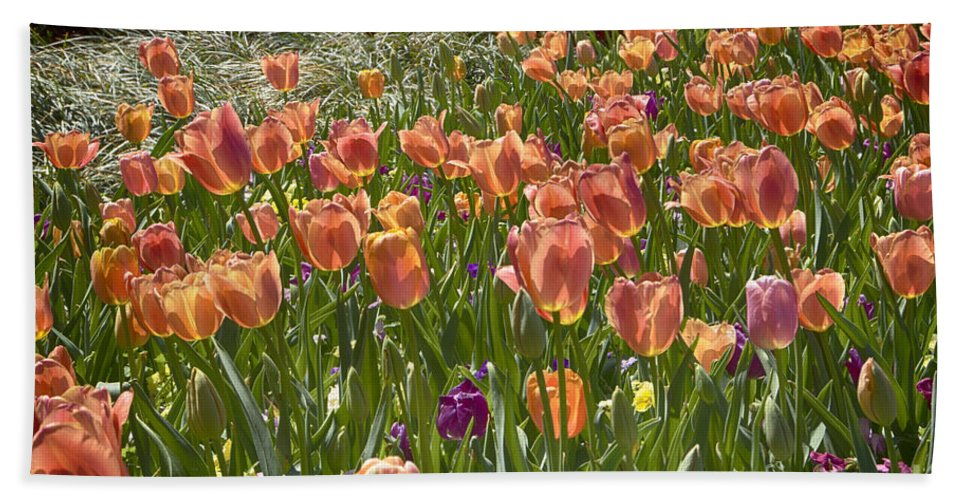 Tulips Hand Towel featuring the photograph Tulips At Dallas Arboretum V31 by Douglas Barnard