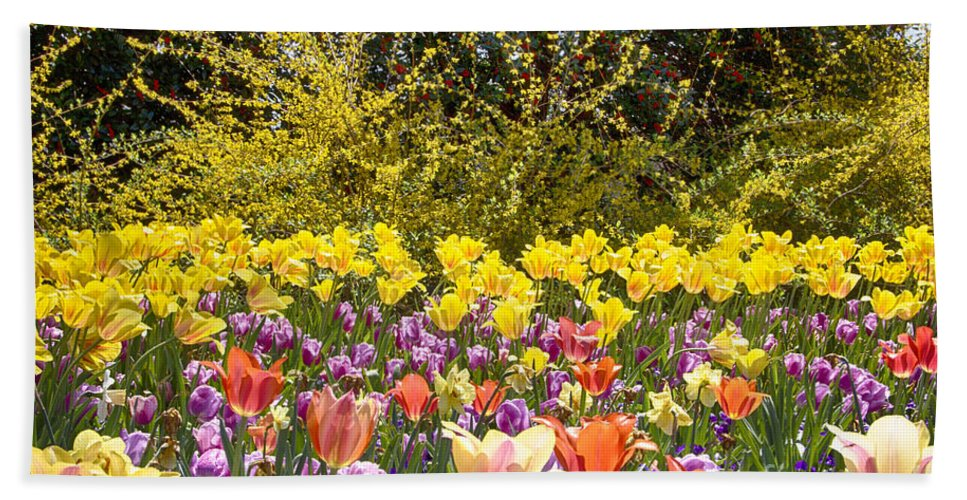 Tulips Hand Towel featuring the photograph Tulips At Dallas Arboretum V32 by Douglas Barnard