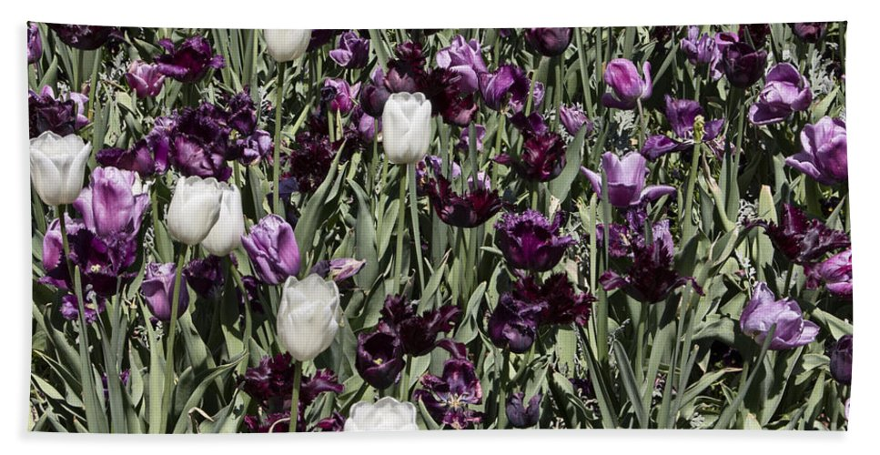 Tulips Hand Towel featuring the photograph Tulips At Dallas Arboretum V43 by Douglas Barnard