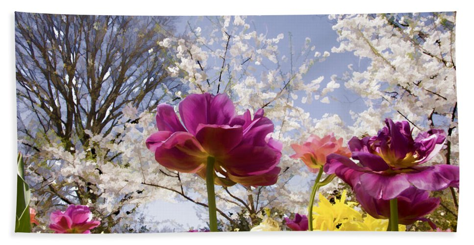 Tulips Hand Towel featuring the photograph Tulips At Dallas Arboretum V46 by Douglas Barnard