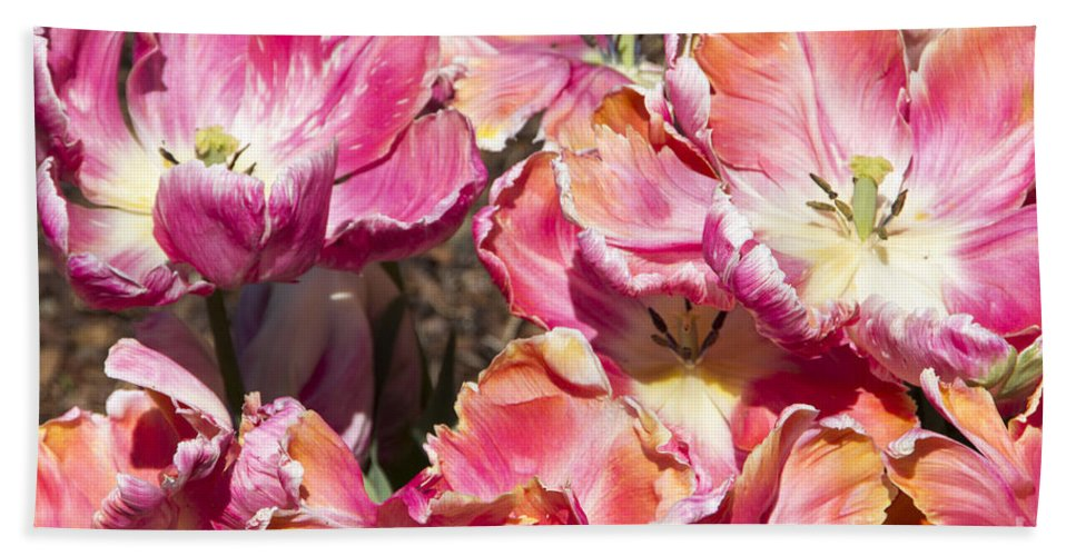 Tulips Hand Towel featuring the photograph Tulips At Dallas Arboretum V58 by Douglas Barnard