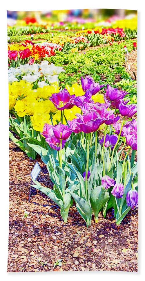 Tulips Hand Towel featuring the photograph Tulips At Dallas Arboretum V65 by Douglas Barnard