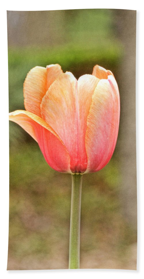 Thanksgiving Point Hand Towel featuring the photograph Tulips At Thanksgiving Point - 18 by Ely Arsha
