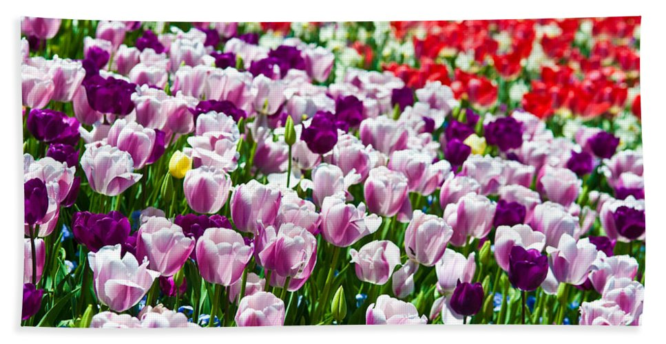 Tulip Bath Sheet featuring the photograph Tulips Field by Sebastian Musial