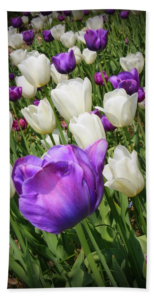Tulips Hand Towel featuring the photograph Tulips In Purple And White by Dora Sofia Caputo Photographic Design and Fine Art