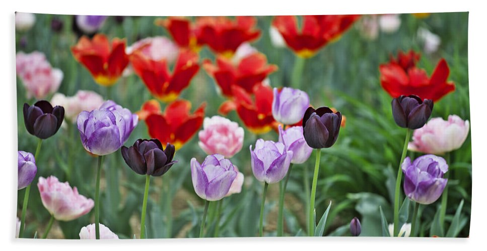 Garden Hand Towel featuring the photograph Tulips by Ivan Slosar