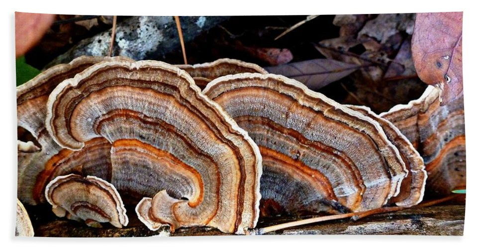 Trametes Versicolor Hand Towel featuring the photograph Turkey Tail Fungi In Autumn by William Tanneberger