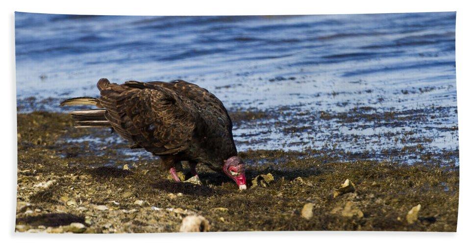 Doug Lloyd Bath Sheet featuring the photograph Turkey Vulture by Doug Lloyd