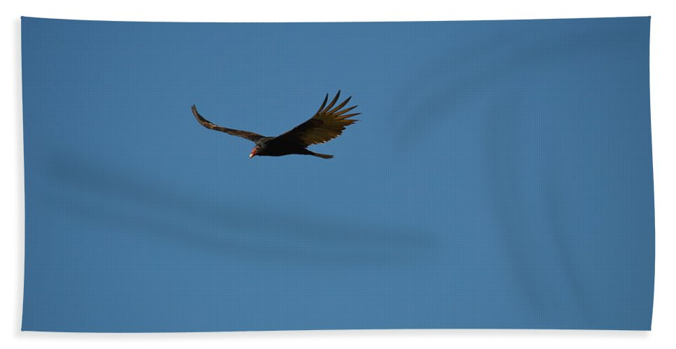 Turkey Vulture Hand Towel featuring the photograph Turkey Vulture by Linda Kerkau
