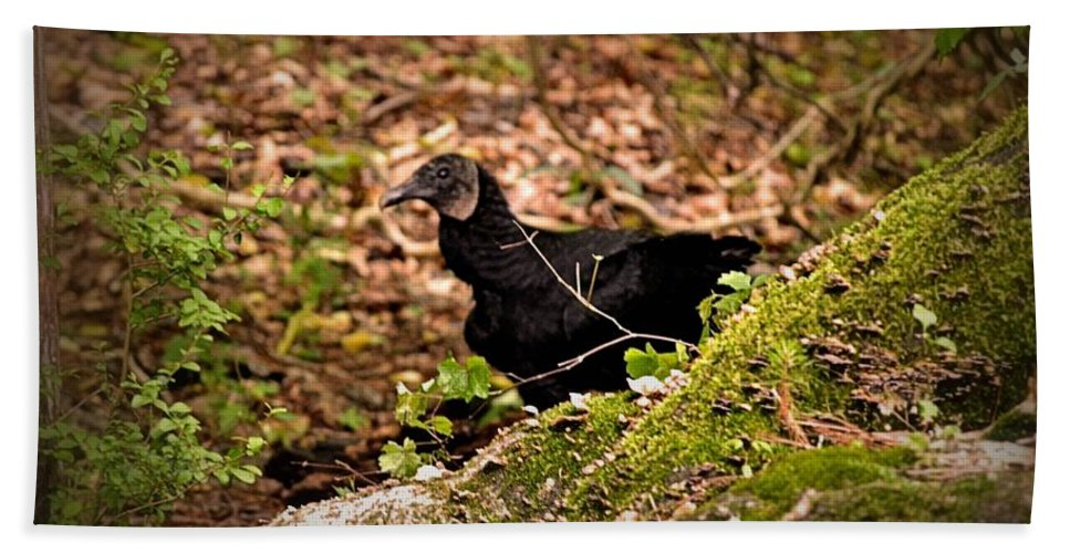 Turkey Bath Sheet featuring the photograph Turkey Vulture by Tara Potts
