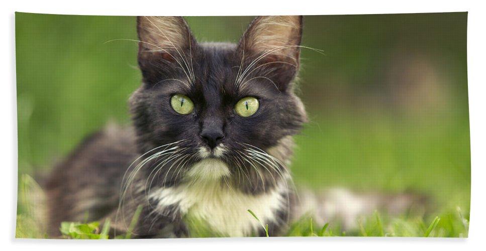 Turkish Angora Bath Sheet featuring the photograph Turkish Angora Cat by Jean-Michel Labat