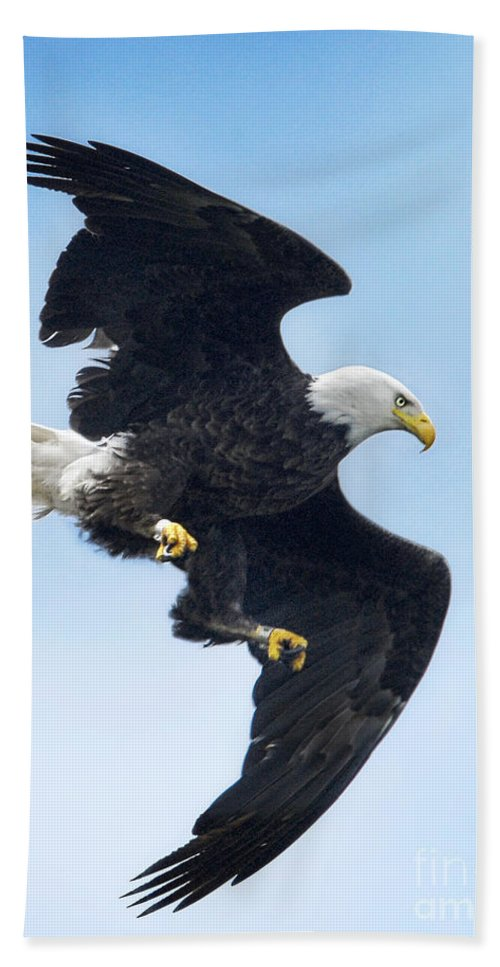 Eagles Hand Towel featuring the photograph Turnabout by Claudia Kuhn