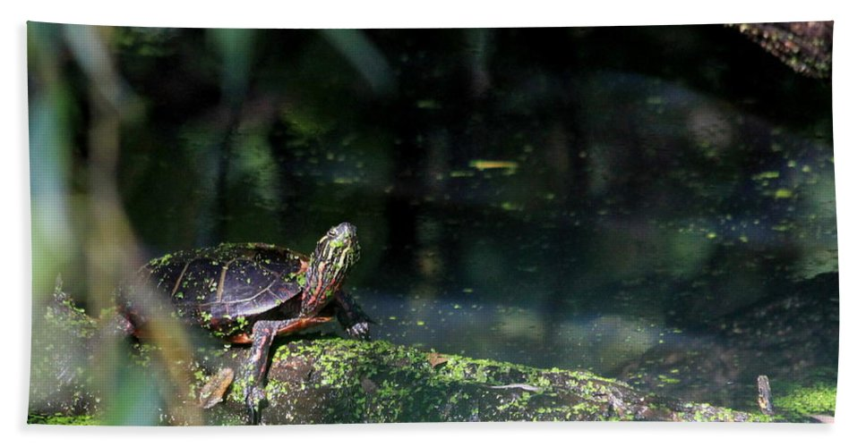 Grotto Hand Towel featuring the photograph Turtle Grotto by Kenny Glotfelty