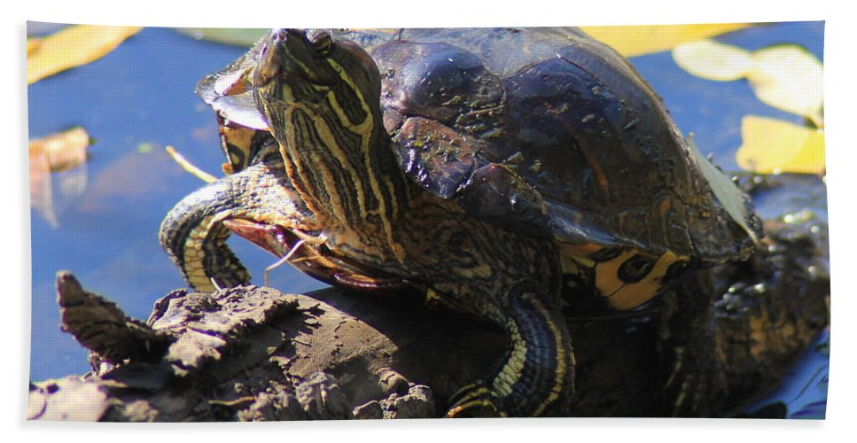 Turtle Hand Towel featuring the photograph Turtle Smile by Kenny Glotfelty