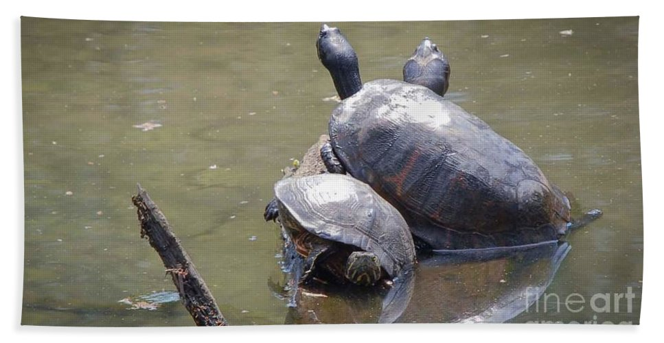Turtles Hand Towel featuring the photograph Turtle Trio by Wesley Farnsworth