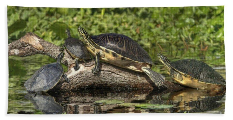 Turtles Bath Sheet featuring the photograph Turtles Sunning by Deborah Benoit