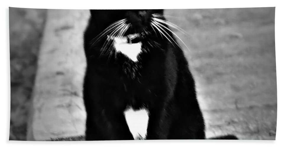 Tuxedo Bath Sheet featuring the photograph Tuxedo Cat by Tara Potts
