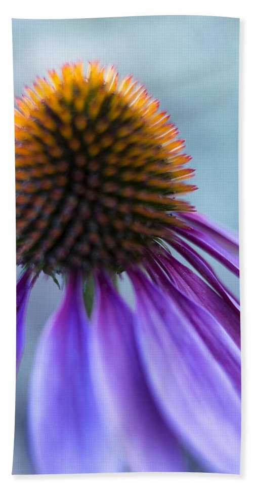 Echinacea Bath Sheet featuring the photograph Twilight by Caitlyn Grasso