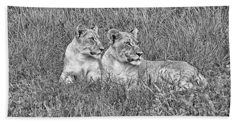 Lioness Bath Sheet featuring the photograph Twins V2 by Douglas Barnard