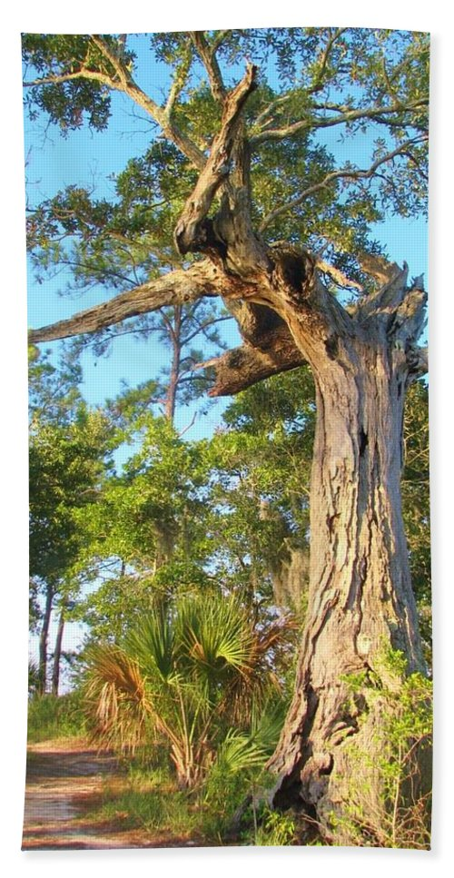 Tree Bath Sheet featuring the photograph Twirling Tree Path by Wild Haven Photography