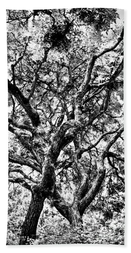 Trees Bath Sheet featuring the photograph Twisted Trunks by Venetta Archer