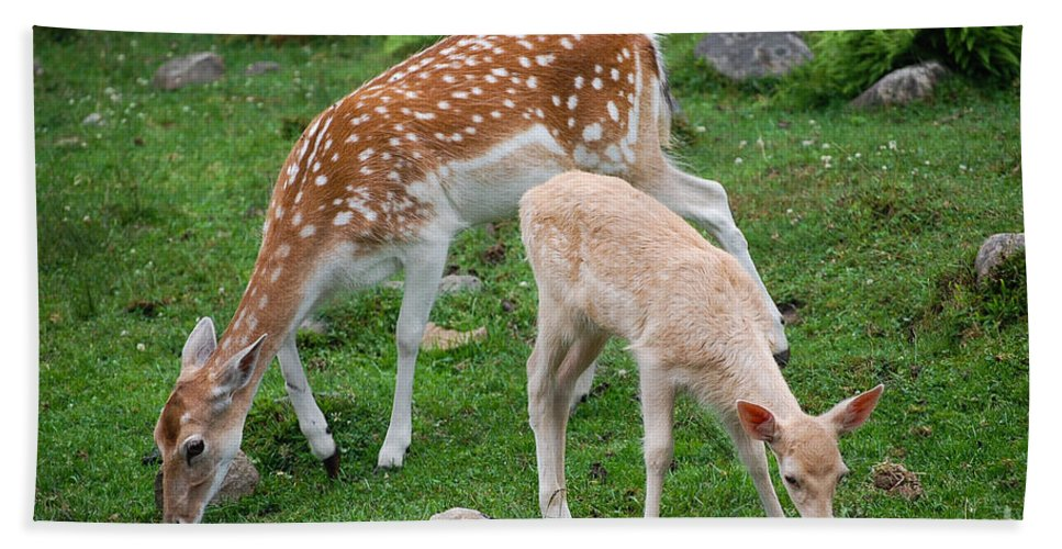 Deer Hand Towel featuring the photograph Two Babes by Bianca Nadeau