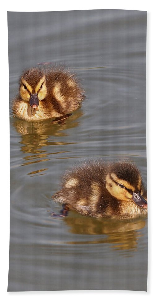 Ducklings Hand Towel featuring the photograph Two Baby Ducklings by Gill Billington