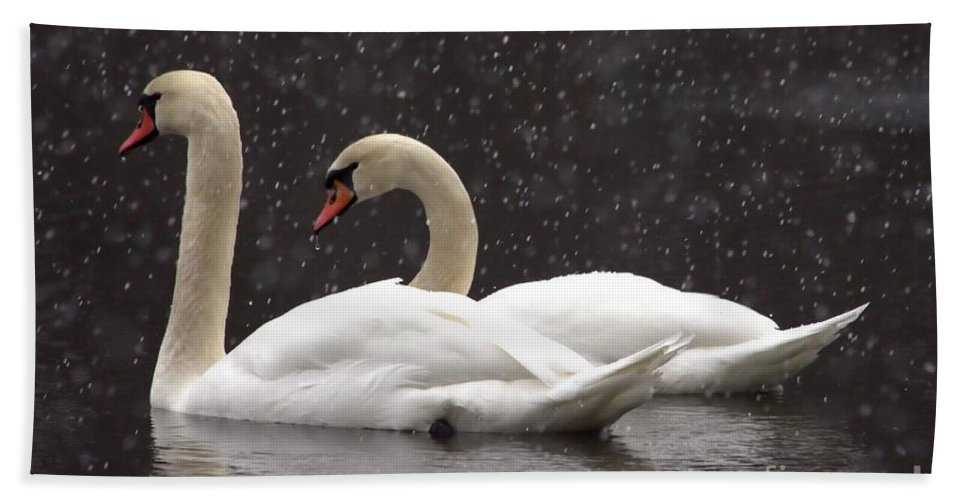 Swan Hand Towel featuring the photograph Two Christmas Swans A Swimming by Kenny Glotfelty