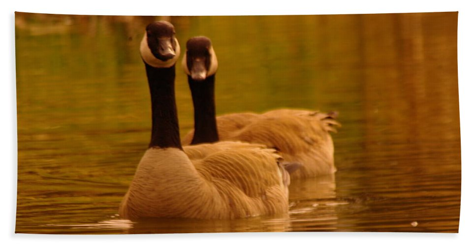 Birds Hand Towel featuring the photograph Two Geese In A Line by Jeff Swan
