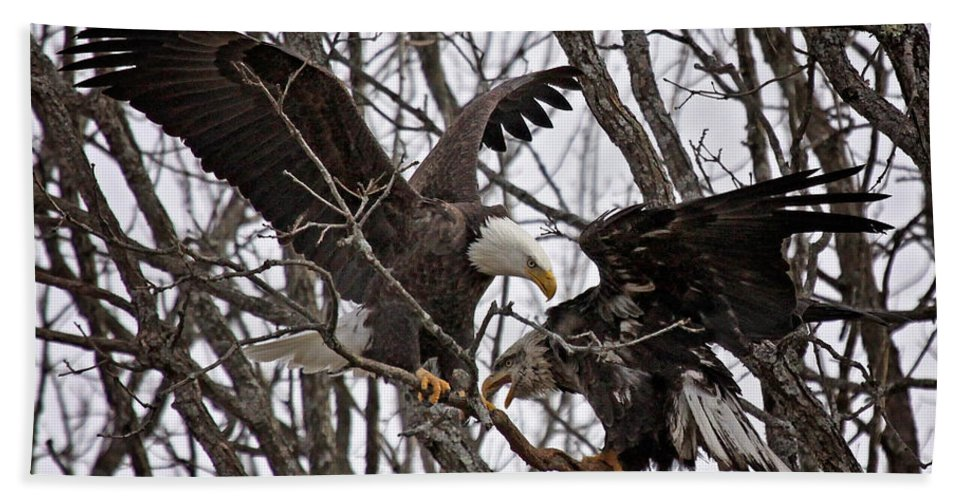 Maine Wildlife Hand Towel featuring the photograph Two In A Bush by Sharon Fiedler