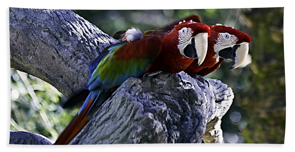 Birds Hand Towel featuring the photograph Two On A Branch by Ken Frischkorn