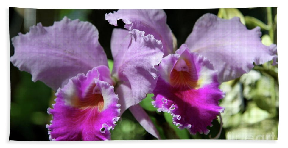 Orchid Bath Sheet featuring the photograph Two Orchids by Christiane Schulze Art And Photography