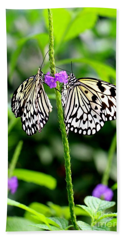 Butterfly Hand Towel featuring the photograph Two Paper Kite Or Rice Paper Or Large Tree Nymph Butterfly Also Known As Idea Leuconoe by Amanda Mohler