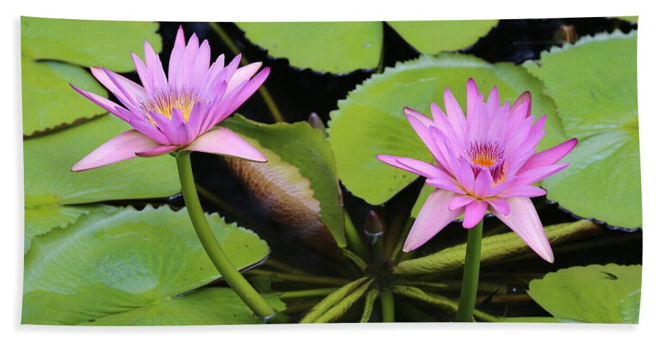 Water Lily Hand Towel featuring the photograph Two Pink Water Lilies by Carol Groenen