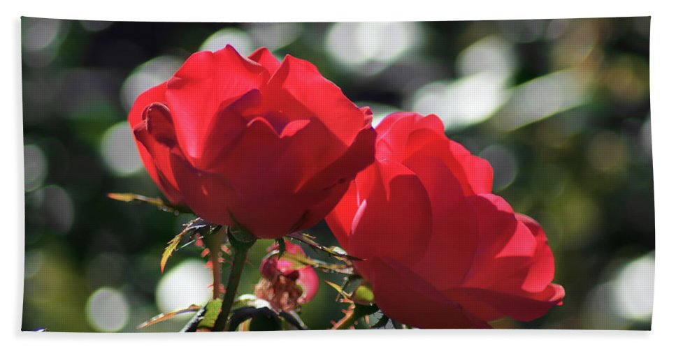 Affection Bath Sheet featuring the photograph Two Red Roses by Alex Grichenko