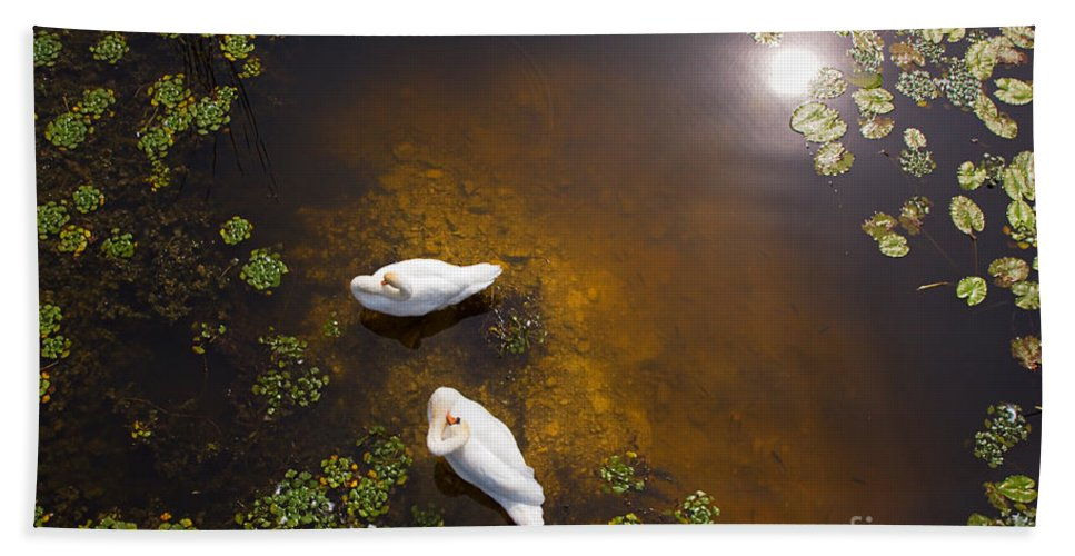 Animal Bath Sheet featuring the photograph Two Swans With Sun Reflection On Shallow Water by Jan Brons