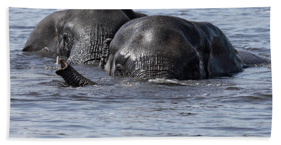 African Elephant Hand Towel featuring the photograph Two Swimming Elephants by Liz Leyden